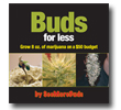 Buds for Less